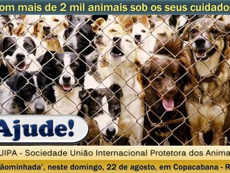 Domingo/22: Suipa realiza 'CÃOMINHADA' para angariar doações para 2 mil animais