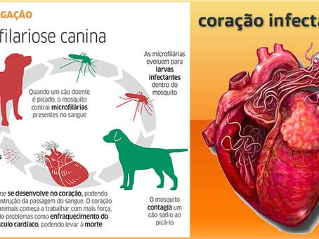 Como prevenir a Dirofilariose Canina (Verme do Coração)