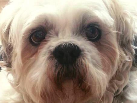 Caso Boss: TJ nega que cachorro possa ser 'autor não-humano' em processo