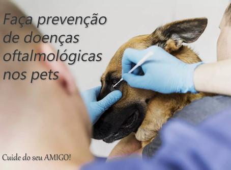 Cinco doenças oftalmológicas mais frequentes nos pets
