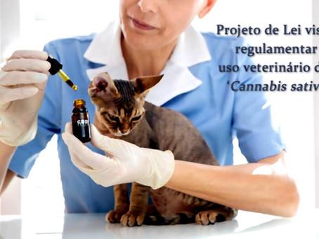 Projeto de lei prevê uso veterinário da Cannabis sativa
