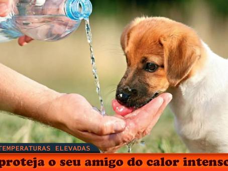 Calor pode ser perigoso para cães e gatos