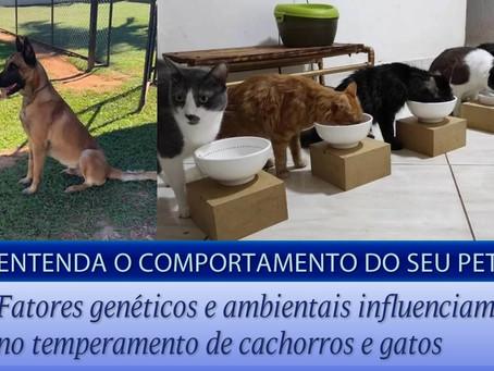 Temperamento animal: entenda o comportamento do seu pet