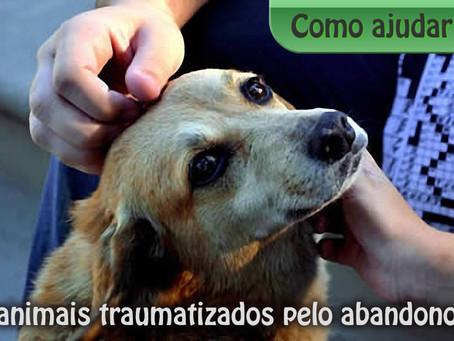 Como ajudar animais traumatizados pelo abandono
