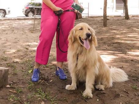 Inaugurado espaço de lazer para cães em Teresina