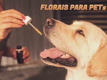 Florais para animais de estimação