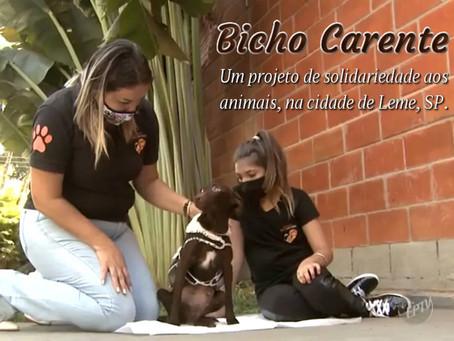 Bicho Carente: voluntárias movidas pelo amor aos  animais em SP