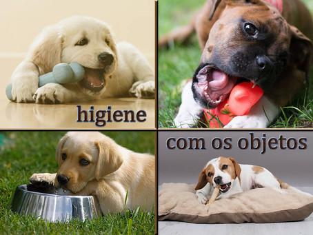 Cuidados essenciais de higiene com os objetos dos pets e com a casa