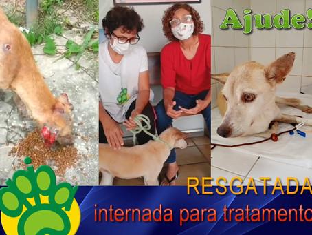 Ajude! Cadela Paloma foi resgatada e internada para tratamento