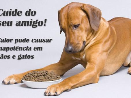 Como melhorar apetite de cães e gatos nas estações quentes