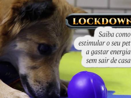 Lockdown: dicas para gastar energia dos cães dentro de casa