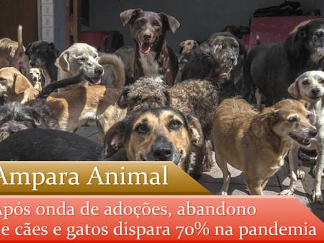 Ampara Animal: abandono de cães e gatos dispara 70% na pandemia