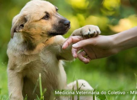 Medicina Veterinária do Coletivo na promoção do bem-estar a animais de abrigos
