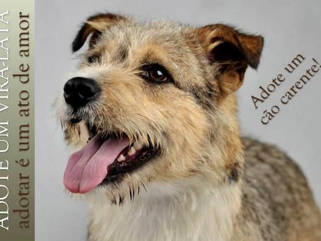 A importância de se adotar um cãozinho carente