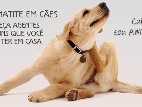 Agentes mais comuns causadores da dermatite em cães