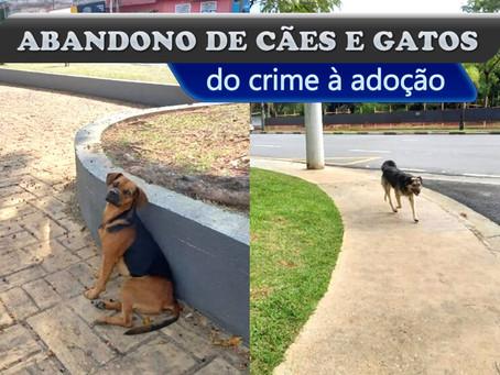Abandono de animais: do crime à adoção