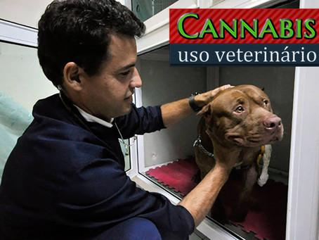 Veterinário trata animais com Cannabis medicinal no RN