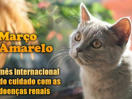 Março Amarelo: cuidados com alimentação para pets com doença renal crônica