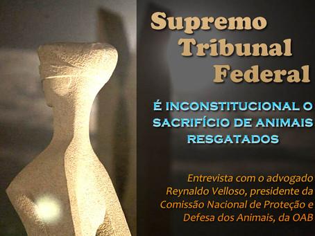 Advogado fala sobre decisão do STF que vetou massacre de animais resgatados