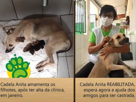 Ajude a APIPA castrar cadelinha reabilitada de acidente