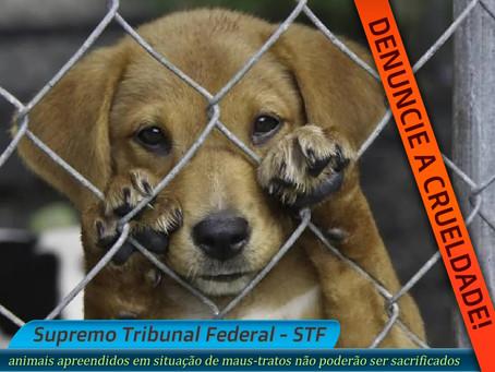 STF veta abate de animais apreendidos em situação de maus-tratos