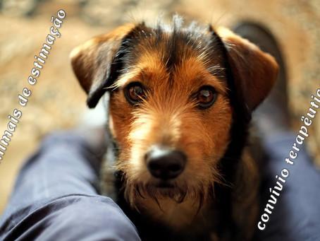 Convívio com animais de estimação pode ser terapêutico