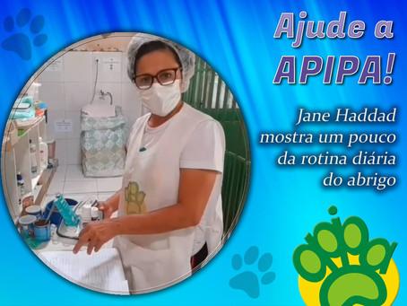 Jane Haddad apresenta o abrigo da APIPA