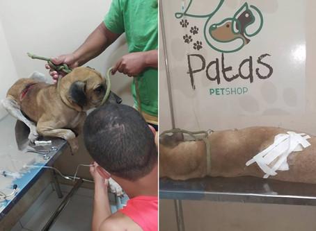 Vigência da nova lei: primeira prisão por maus-tratos a animais no Piauí