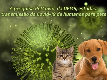 PetCovid: estudo da UFMS precisa de pets voluntários em testagem de Covid-19