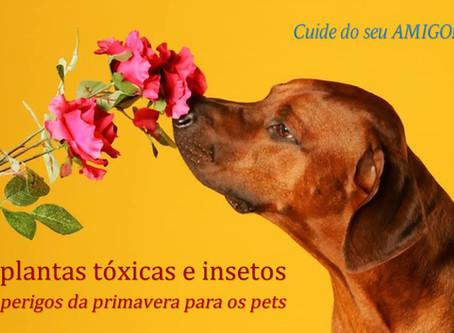 Plantas tóxicas e insetos: perigos da primavera para os pets