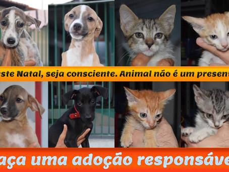 Filhotes de cão e gato esperam por adoção na APIPA