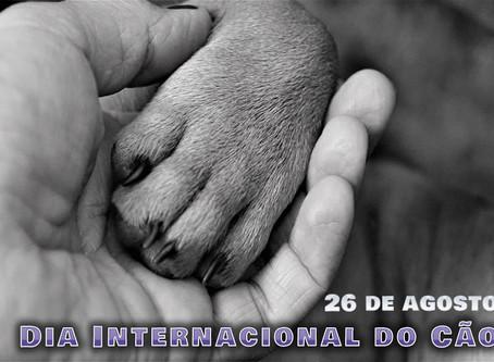 Dia Internacional do Cão: seu melhor amigo aguarda para ser adotado por você