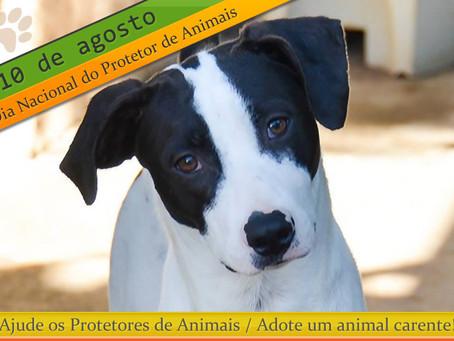 Protetores: heróis anônimos que ajudam animais em situação de vulnerabilidade