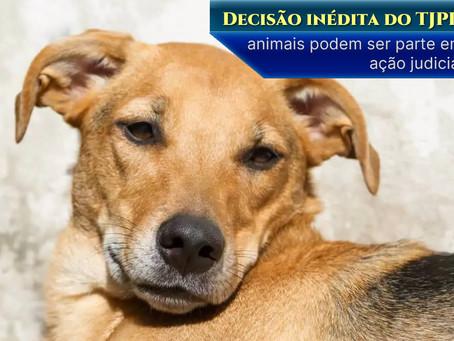 TJPR determina que animais podem ser parte em ação judicial