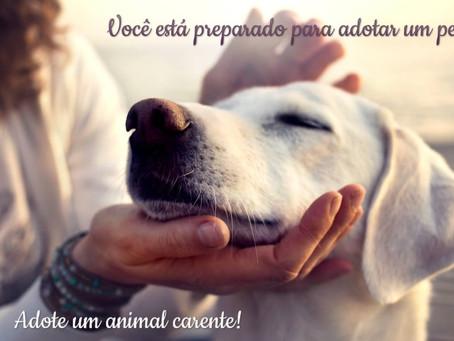 Adoção: você está preparado para cuidar de cachorro ou gato?
