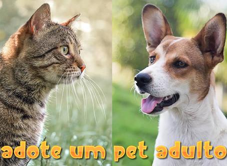 Entenda as diferenças entre adotar animais adultos e filhotes