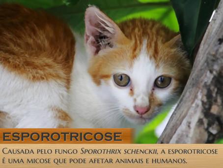 Esporotricose: entenda como esta zoonose afeta cães e gatos