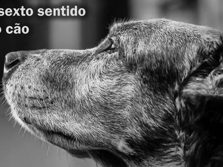Cachorros têm sexto sentido?