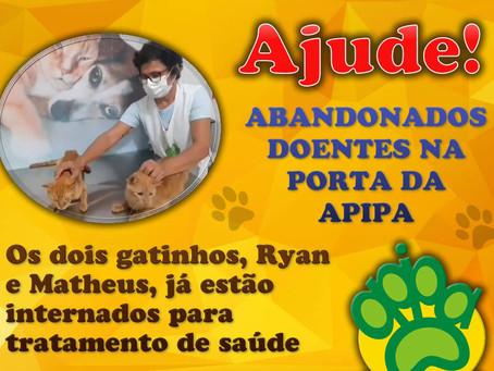 Ajude! Gatinhos doentes são abandonados na porta da APIPA