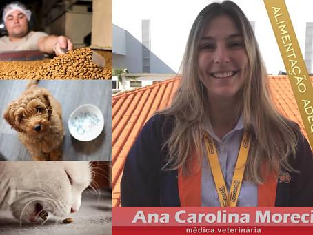 Cães e gatos necessitam de alimentação adequada à idade e ao porte