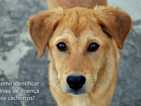 Como identificar sinais de doença no cachorro