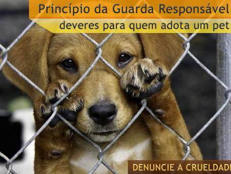 Princípio da Guarda Responsável: deveres para quem adota um pet
