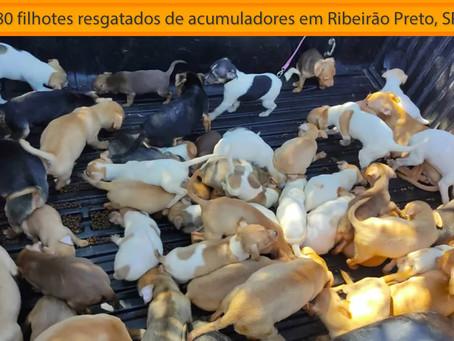 Acumuladores: protetores resgatam cerca de 80 filhotes maltratados em SP