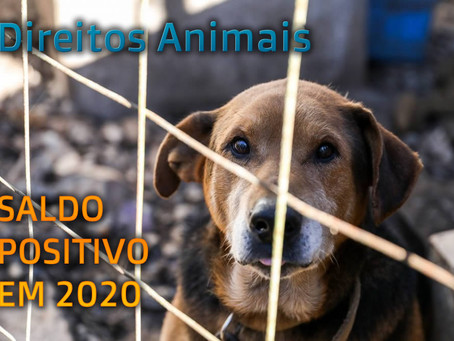 Saldo de 2020 para pauta do Direito Animal é positivo
