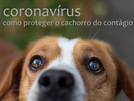 Saiba proteger seu cachorro do contágio pelo coronavírus