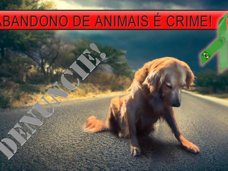 Abandono: prática criminosa perversa que deve ser denunciada