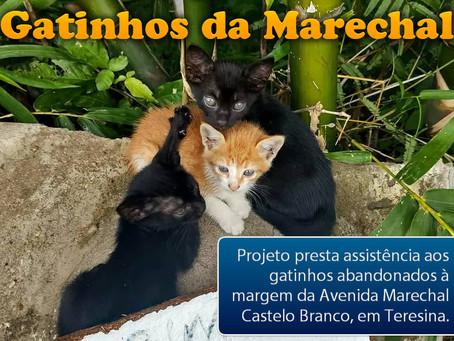 Gatinhos da Marechal: projeto ajuda felinos abandonados em avenida de Teresina