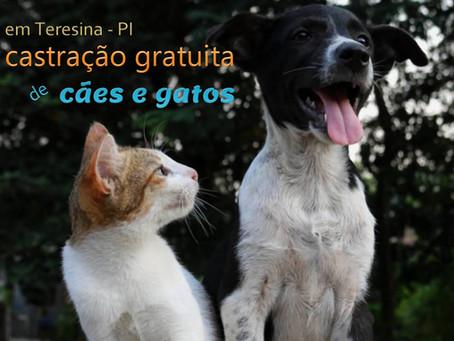 Castração gratuita de cães e gatos em Teresina