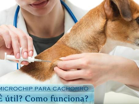 Microchip para cachorro é útil? Como funciona?