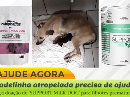 Ajude! Precisamos de 'SUPPORT MILK DOG' para filhotes prematuros